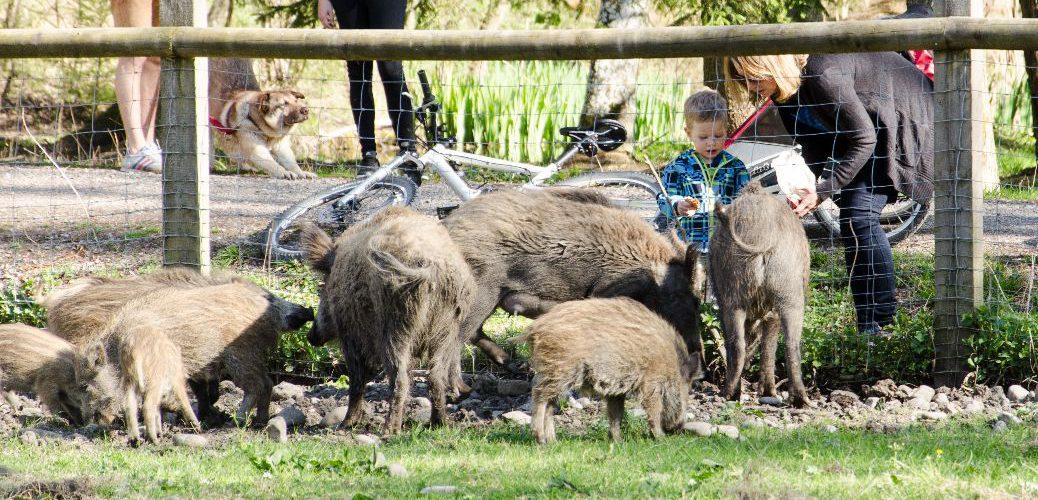 Besuch bei den Wildschweinen im Landsberger Wildpark