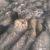 Haufenweise Frischlinge im Landsberger Wildpark
